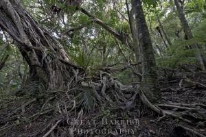 Big Tree 2904