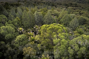 Aerial Forest DJI_0027