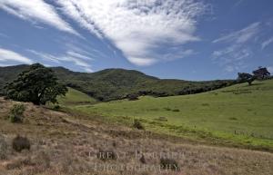 Harataonga Hills 6419
