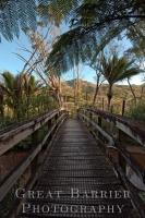 Kaitoke Hot Springs Track _1710060