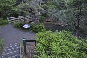 Kaitoke Hot Springs Track _1710152cgf96