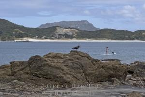 Two Birds & a Quarry 7175