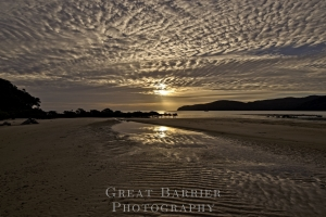 Gooseberry Flat Beach Tryphena 8359