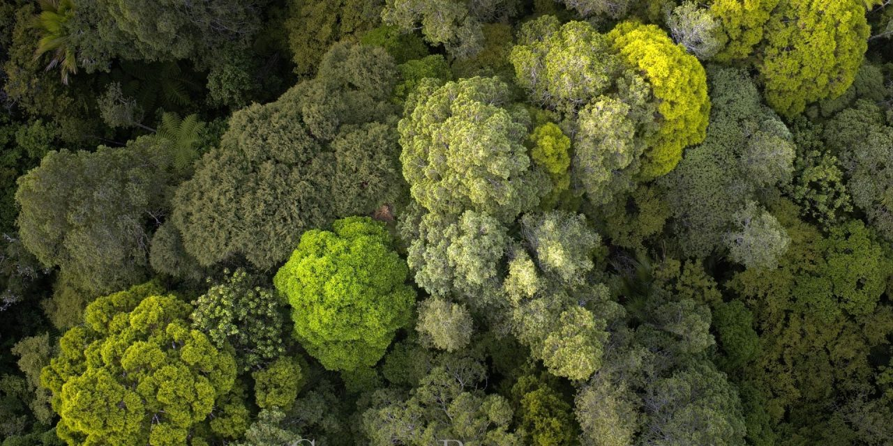 Aerial Photography of Aotea's Forest